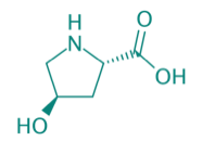 trans-L-4-Hydroxyprolin, 97%