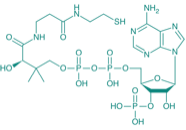 Coenzym A Hydrat, 300U/mg